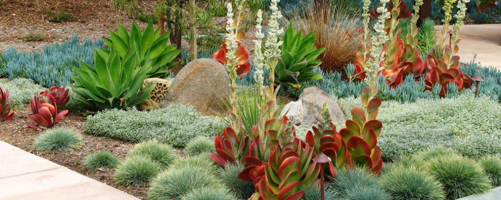 Drought Tolerant Backyard Designs get paid to not plant grass landscaping front yardslandscaping ideas backyard ideasgarden ideasdrought tolerant 3